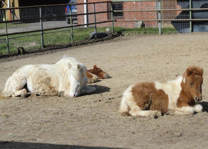 Müde Ponies
